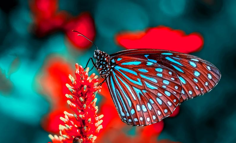 Butterfly April 2021 astrology forecast